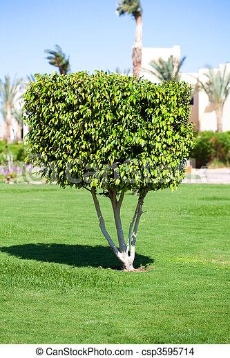 fa, cserje, kert, egy - csp3595714