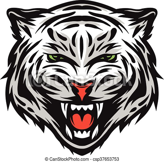 face of a white bengal tiger vector illustration rh canstockphoto com Panda Clip Art bengal tiger clipart