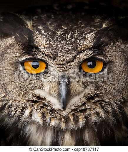 Face portrait of Eagle Owl, Bubo bubo. - csp48737117