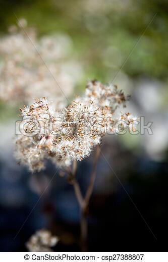 Fading Plant - csp27388807