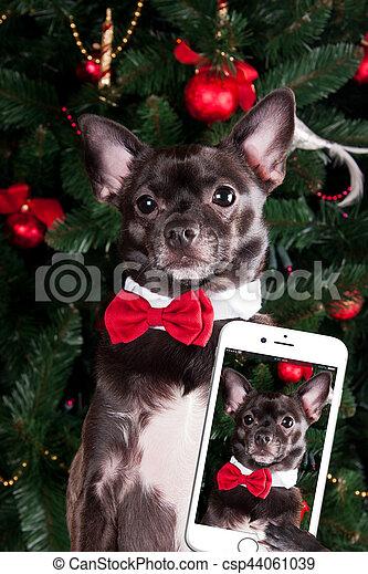 faire, selfie, chien - csp44061039