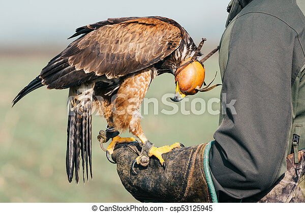 Falconer with hawk on the hand - csp53125945