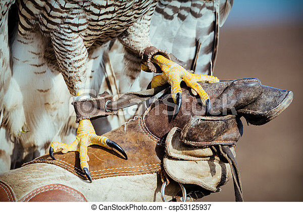 Falconer with hawk on the hand - csp53125937
