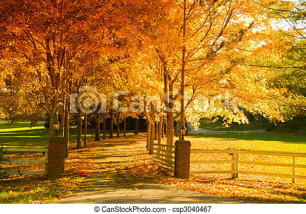 Fall alley - csp3040467