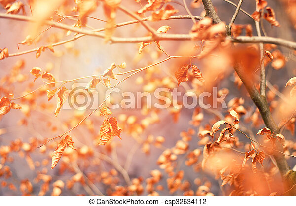 fall autumn brawn dry leaves background blur autumn background with