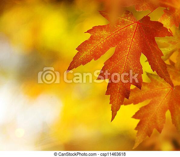 Fall. Autumn - csp11463618