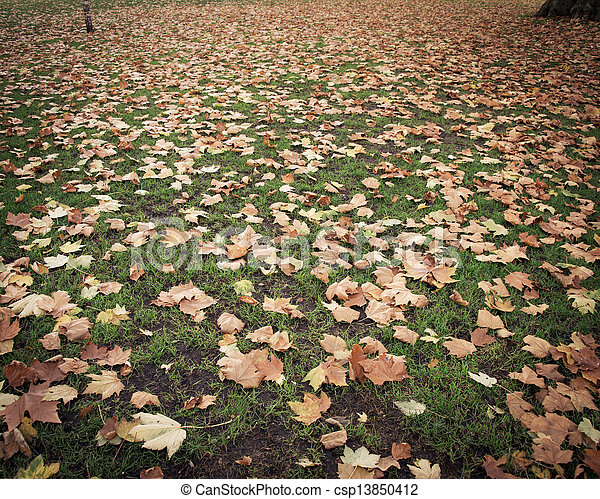 Fall autumn season in the forest - csp13850412