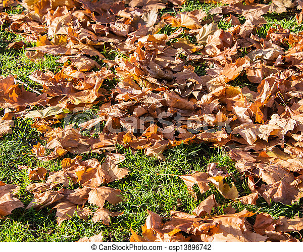 Fall autumn season in the forest - csp13896742