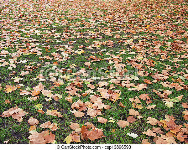 Fall autumn season in the forest - csp13896593