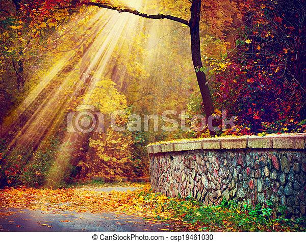 Fall. Autumnal Park. Autumn Trees in Sunlight Rays - csp19461030