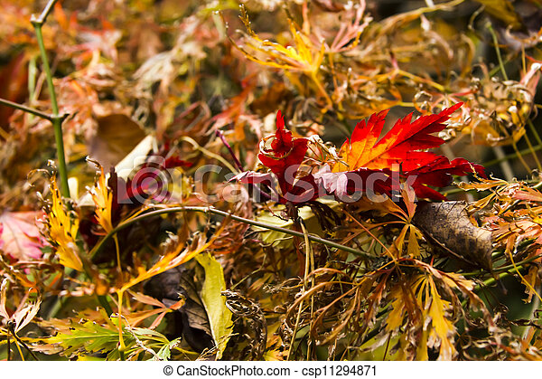 Fall background - csp11294871