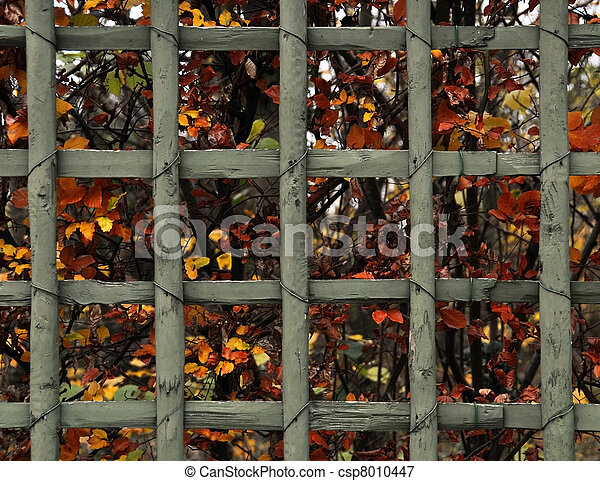 Fall background - csp8010447