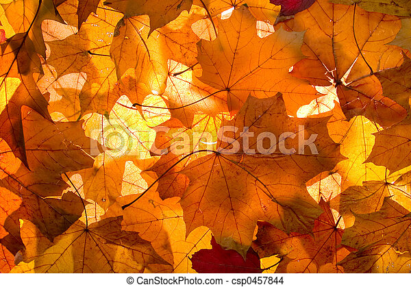 Fall - background - csp0457844