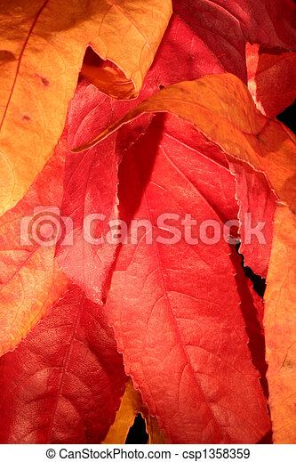fall colors 2 - csp1358359