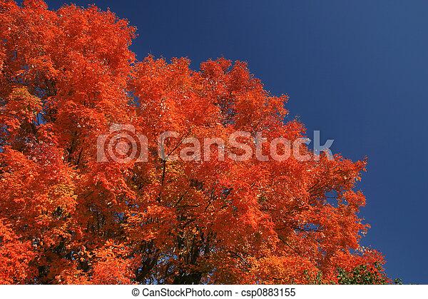 Fall colors - csp0883155