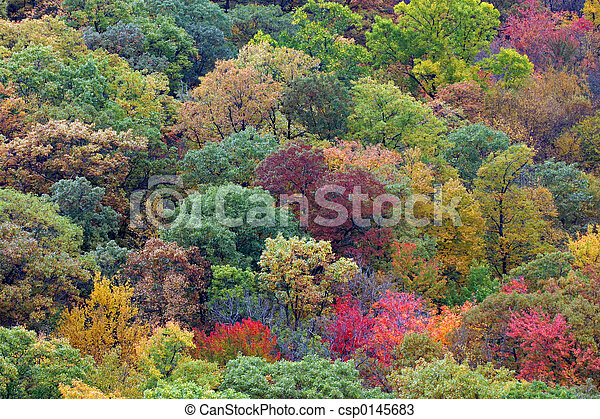 fall colors - csp0145683