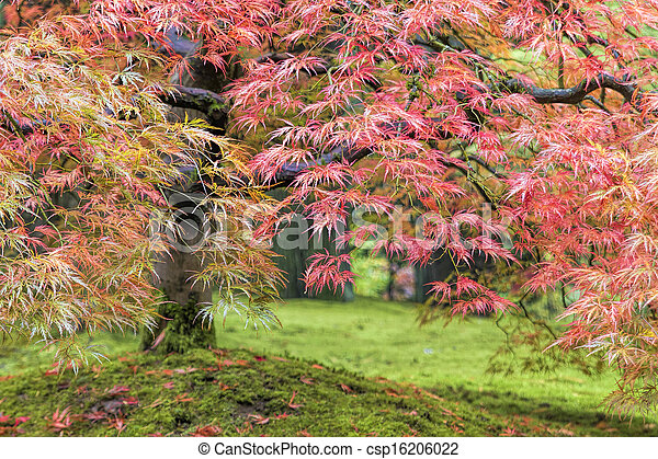 Fall Foliage of Japanese Maple Tree - csp16206022