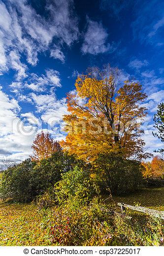 Fall Foliage on Beautiful Maple Trees - csp37225017