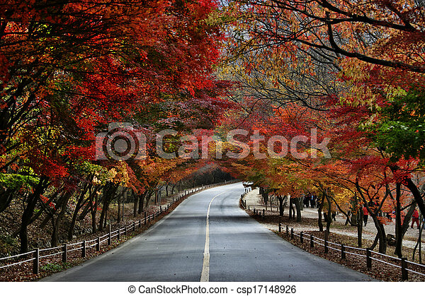 Fall foliage road - csp17148926