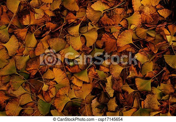 Fall Foliage - csp17145654