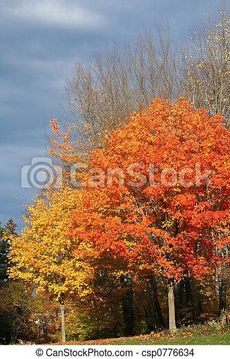 fall foliage - csp0776634