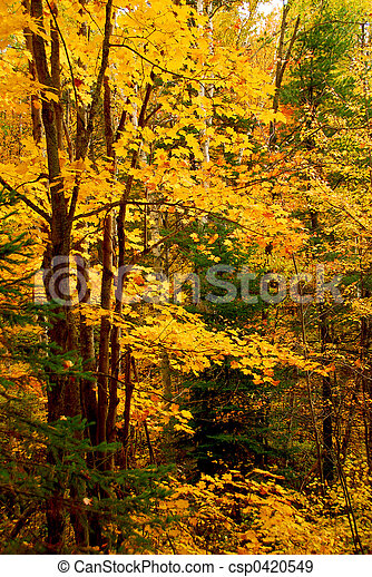 Fall forest background - csp0420549