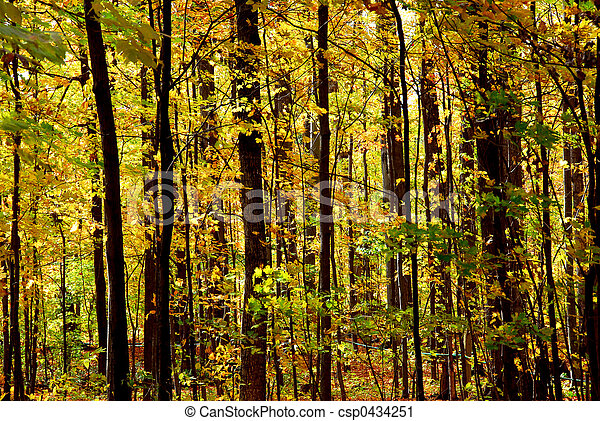 Fall forest landscape - csp0434251