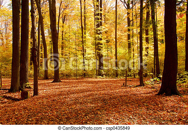 Fall forest landscape - csp0435849