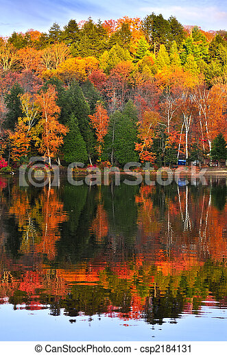 Fall forest reflections - csp2184131