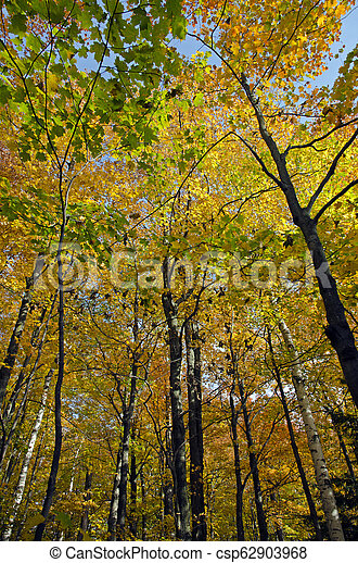 fall forest - csp62903968