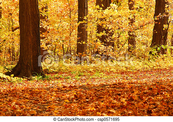 Fall forest - csp0571695