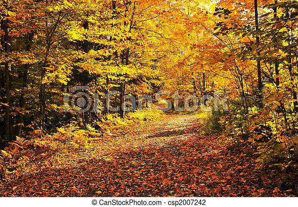 Fall forest - csp2007242
