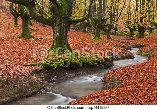 Fall in the forest - csp14415857