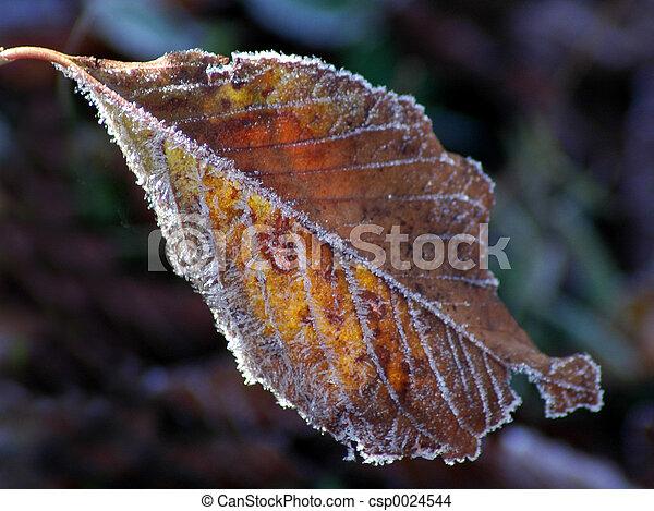 Fall leaf - csp0024544