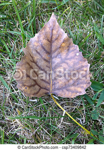Fall Leaf - csp73409842