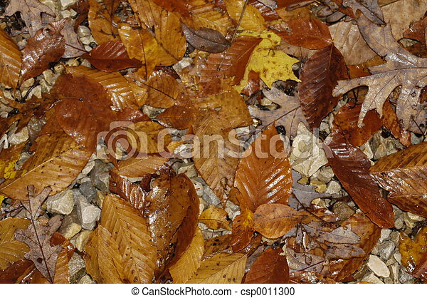Fall Leaves 1 - csp0011300