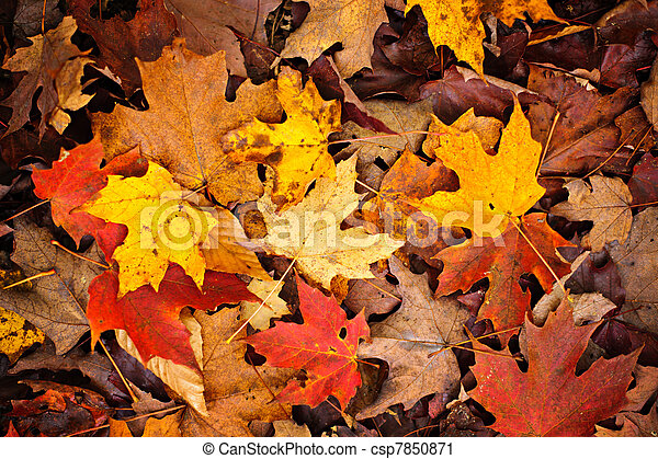 Fall leaves background - csp7850871