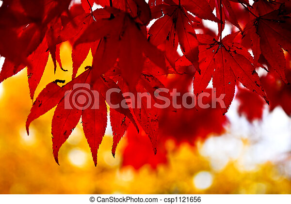 Fall leaves background - csp1121656