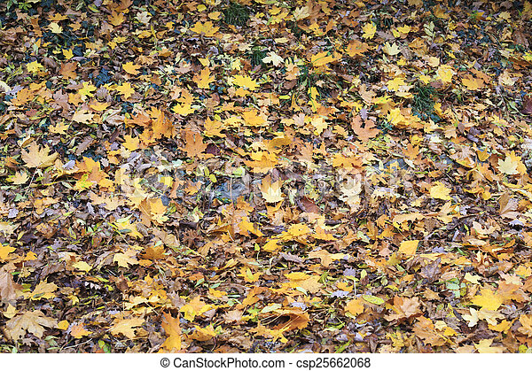 Fall Leaves Background - csp25662068