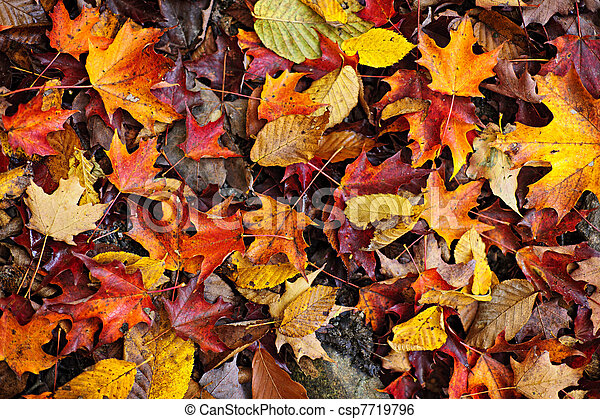 Fall leaves background - csp7719796