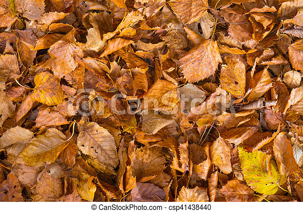 Fall leaves background - csp41438440