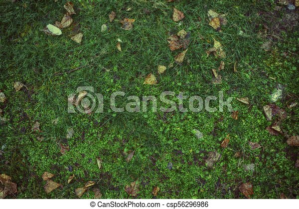 grass field from above. Fall Leaves On Green Grass Field, View From Above, Autumn Background. -  Csp56296986 Field Above P