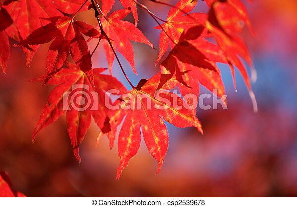 fall leaves - csp2539678
