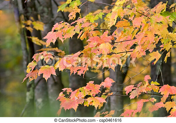 Fall Leaves - csp0461616