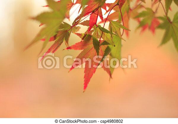 Fall Leaves - csp4980802