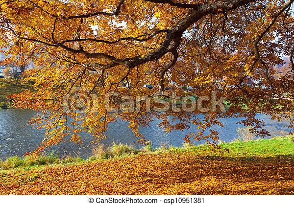 fall leaves trees - csp10951381