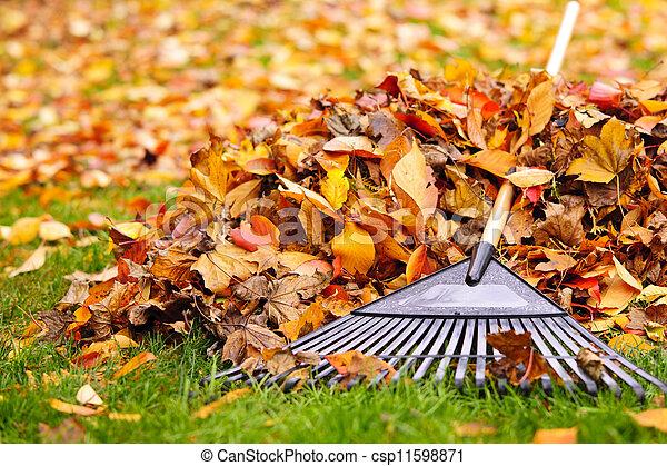 Fall leaves with rake - csp11598871
