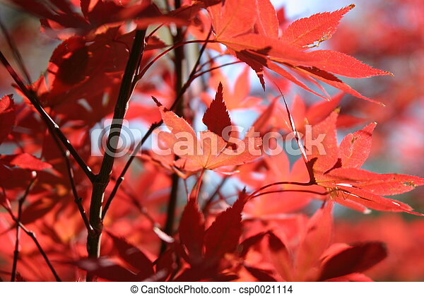 Fall Leaves2 - csp0021114