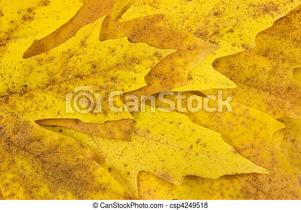 Fall maple leaves background - csp4249518