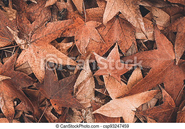 fall maple leaves background - csp93247459